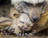 BABY FOX SNUGGLE Photo Pr...