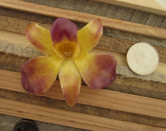 Real Dendrobium Orchid Necklace - Yellow and Purple flower silver bail - Hawaii, Botanical, Plants, garden, Flower love, Unique gift, love