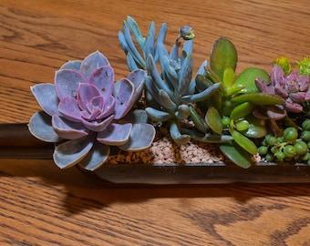 Wine Bottle Succulent Planter Kit DIY