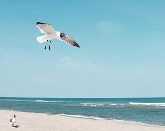 Bird Photograph or Canvas, Ocean Photography, Seagull, Ocean, Waves, Teal, Nautical Print, Beach Cottage Wall Art, Seascape  - Little Feet