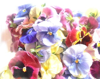 FRESH ORGANIC PANSIES Soft Color Collection Freah or Candied, Edible, Salads, Baking, Drink Toppers, Cupcake Toppers, Cake Decorations 35
