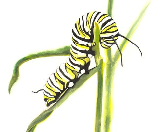 Limited Edition GICLEE MINI Print / Watercolor painting of an Monarch Butterfly Caterpillar