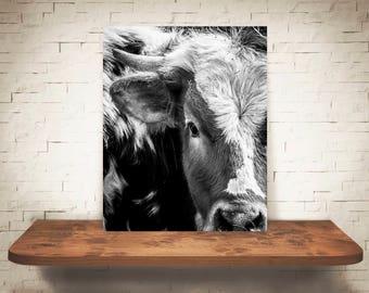 Longhorn Cattle Cow Photograph - Fine Art Print - Black White Photo - Wall Art - Rustic Decor - Wall Decor - Picture Cows - Farmhouse Decor