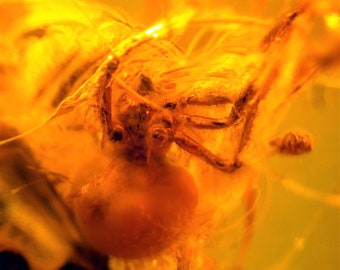 Fossil spider and insect in baltic amber - ca. 1.4 x 1,2 x 0,3 cm