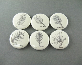 6 pine tree refrigerator magnets, pins or wine charms, one inch, balsam, spruce, larch, cedar, kitchen decor, cute fridge magnet 1266