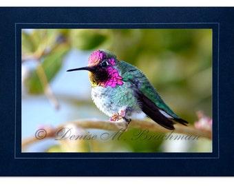 Hummingbird Photo Greeting Card - Bird Card Blank Inside - Pink Green Bird Photo - Blank Hummingbird Note Card - Anna's Hummingbird Card