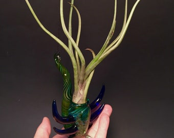 Green Curled silver and gold fumed hanging airplant terrarium with spikes 5.5 x 3 x 4