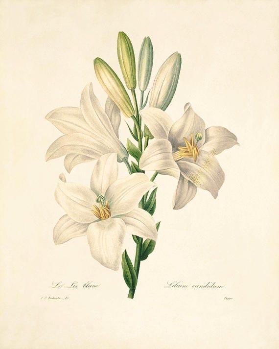 Vintage Flower Art 103