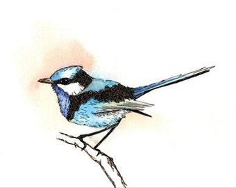 Blue Wren Bird Print Hand Drawn Original Watercolour Illustration