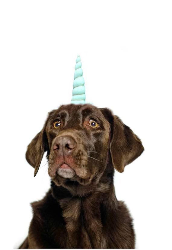 Dog Unicorn Headband || Unicorn Headband for Dog || Dog Unicorn Costume || Dog Unicorn || Unicorn Dog