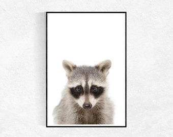 Raccoon Baby Animal Print, Animal Photo, Nursery Print, Animal Wall Art, Kids Decor Print, Nursery Printable Art