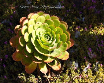 Green Giant, Photography, Home Decor