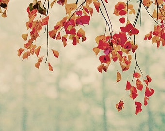 Dripping Foliage - Nature Photography - Autumn Leaves - Fall Wall Art