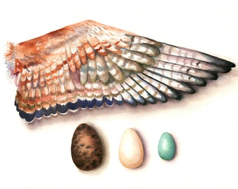 Bird Wing and Eggs Watercolor Print 11 x 14, Nature Painting, Nature Art, Home Decor Wall Art Bird Aquarelle, Watercolor Print