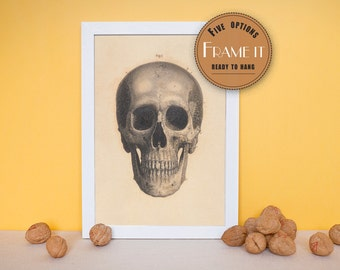 """Vintage illustration of frontal view of the skull - framed fine art print, art of anatomy, home decor 8""""x10"""" ; 11""""x14"""", FREE SHIPPING - 179"""
