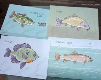 Freshwater Fish postcards (set of 4)