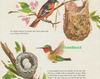 Vintage Image: Bird Nests