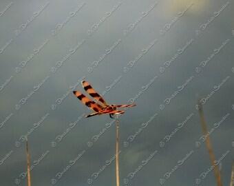Halloween Pennant Dragonfly - Digital Download