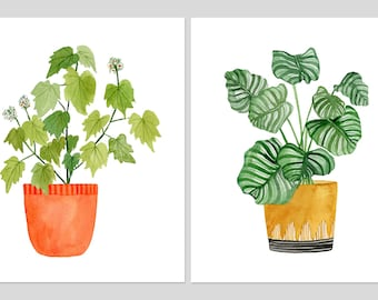 """Zwei Druck-Set: """"Sparmannia Africana"""" & """"Calathea Ornata"""" Museumsqualität von Lindsay Gardner"""