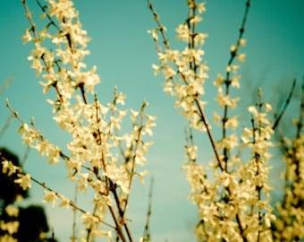 Yellow spring flowers . flower photography. dreamy nature photograph . aqua mint green nursery wall art . farmhouse decor . Rapturous