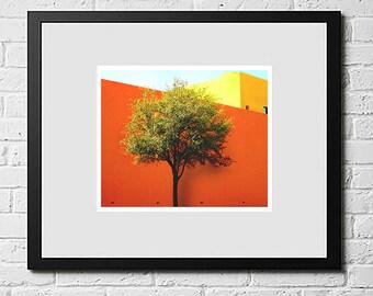 Tree, Mexico Photography, Travel Photos, Colourful Wall Art, Colourful Photography Print,, Colourful Artwork, Home Decor wall Art,Digital