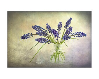 Photographic print, grape hyacinth photo print, flower photo print, fine art flower print, gift for her, gift for gardener. muscari photo