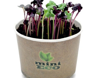 Indoor herb garden etsy red radish rambo sango microgreen grow kit 400 seeds included 4gr vegetable herb growing workwithnaturefo