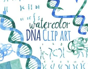 Watercolor DNA clip art, Science watercolor art, Chromosones art, DNA Genetics artwork, RNA Illustrations, Watercolor Science Artwork