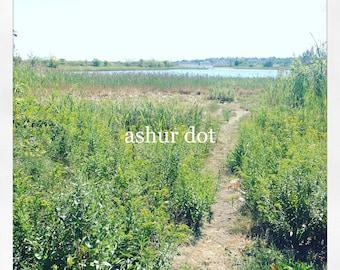 "Summer Marsh 4x4"" Print"