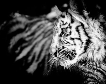 Tiger Cub Photograph - Wildlife Art Photography - Black and White Animal Home Decor - Monochrome Fine Art Photography