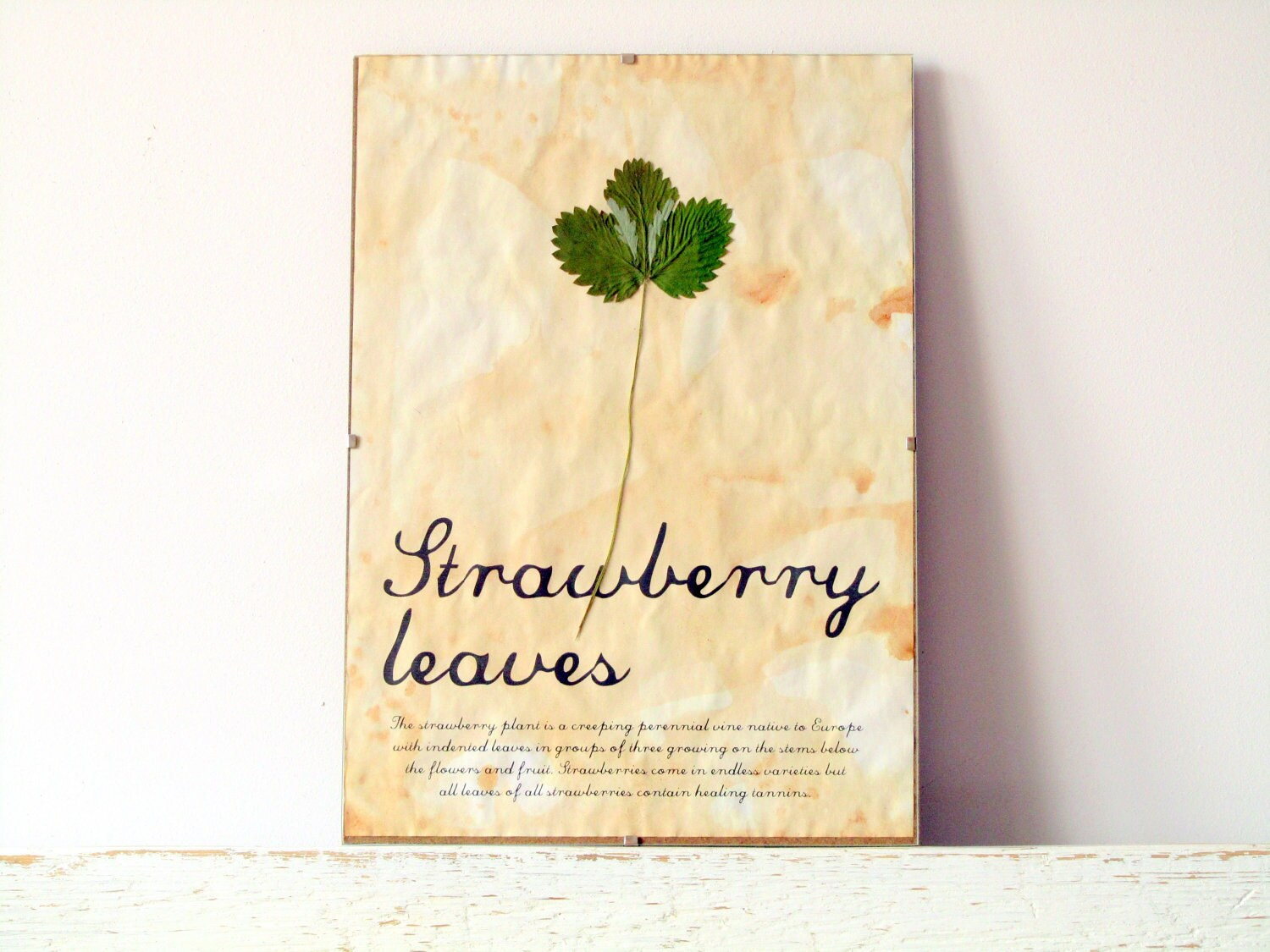 Kitchen wall decor Dried Pressed Leaf Strawberry leaves with