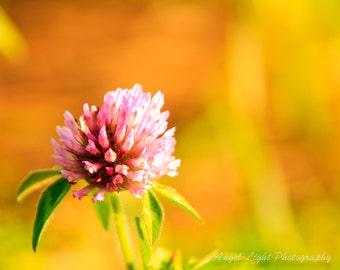 Wildflowers of rural Iowa