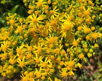 Wildflower Yellow, Wildflower Poster, Wildflowers, Flower Posters, Yellow Flowers
