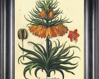 BOTANICAL PRINT Besler 8x10 Botanical Art Print 15 Beautiful Large Yellow Flower Seed Chart with Antique Writing Spring Garden Wall Decor