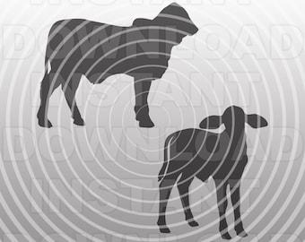 Brahman Calf SVG File,Brahman Calves svg,Farm Animal svg,Livestock svg,Cattle svg-Commercial & Personal Use- Cricut,Silhouette,Cameo,Vinyl