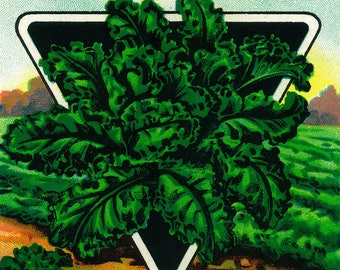 Kale - Vintage Seed Packet (Art Print - Multiple Sizes Available)