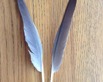 Lot 2- 2 Pcs Duck Feathers, Real Natural Feathers for Craft, Grey Ethical Feathers, Australia