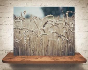 Wheat Photograph - Fine Art Print - Color Photography - Wall Art - Wall Decor -  Farm Pictures - Farmhouse Decor - Country Decor