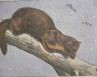 ANTIQUE 1907 La Martre Marten weasel mammal signed animal print Chromolithograph Mahler German artist Collectors item Birthday Authentic