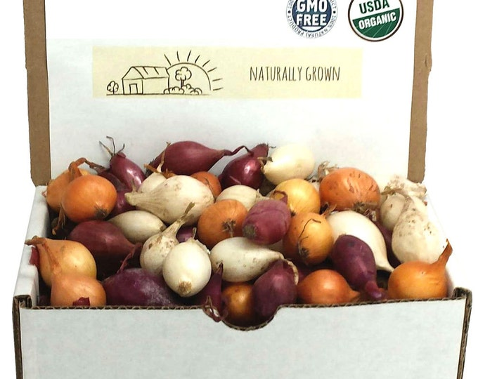 Mixed Red White and Yellow Onion Sets Organic Non-GMO | Onion Bulbs 1 Pound Spring shipping