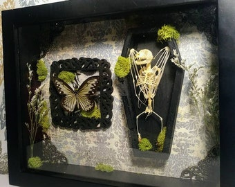 Bat Skeleton and Butterfly Display with Coffin