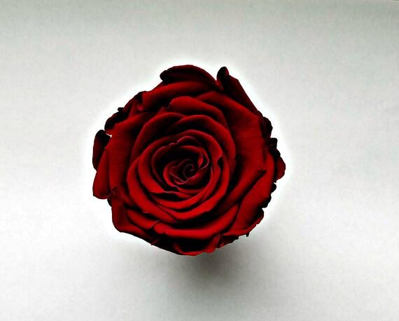 Preserved rose 6 pack, Burgundy rose, Everlasting rose, Forever rose, wedding rose, engagement rose red rose, wholesale rose, rose sale
