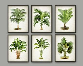 Palm Tree Botanical Wall Art Print Set of 6 - Modern Home Decor - Palm Tree Book Illustration Prints  -Palm Tree Botanical Prints - AB554