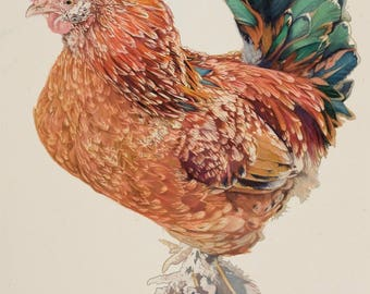 Red Brahma Rooster with Blue highlight. Watercolour Giclee Print.