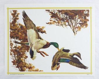 Vintage 1970's Fred Sweney Mallards Print