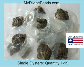 Akoya Oyster w/ Genuine Pearl! (Unopened /Vacuum Packed)