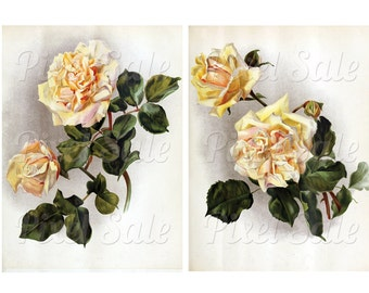 ROSES instant download, wedding clipart, digital flowers, white pink rose JPG digital download no.023