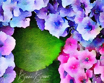 Watercolor Hydrangeas fine art print - painted photo, colorful hydrangeas, photo wall art for home or office