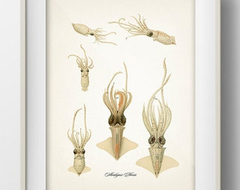 Abraliopsis Morisii Squid - OC-20 Fine art print of a vintage natural history antique illustration