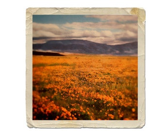 Instant Download Nature Photography Digital Download Color Photograph Vintage California Golden Poppies  Commercial Use